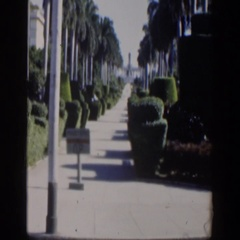 1951: view of a sidewalk with shrubbery along the side. CUBA Stock Footage