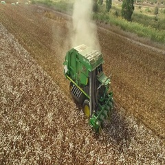 Combine shortness of cotton israeli  agriculture  Stock Footage