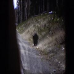1951: big ole bear crossing the highway. WYOMING Stock Footage