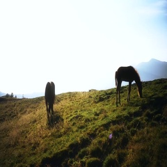 Mare and foal grazing in mountains Stock Footage