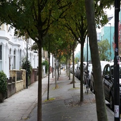 Alley of trees and typical English houses in London Stock Footage
