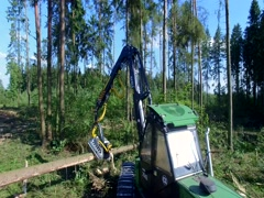 Forest cutting. Shooting with the drone. Timber harvester. Stock Footage