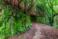 Subtropical forest in Tenerife, Spain Stock Photos