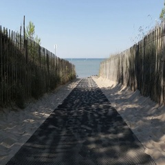 Path as  natural border fence and pines to sea made of wooden planks 4K Stock Footage