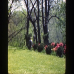 1949: multicolor bushes in a garden like area girl running towards CINCINNATTI Stock Footage