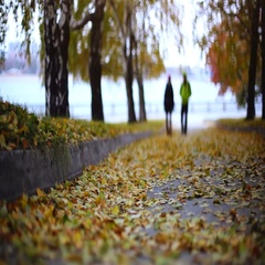 Blurred silhouette of couple in love in fallen leaves in autumn park. 1920x1080 Stock Footage