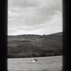 1938: one speedboat follows another speedboat making u-turns in the water Stock Footage