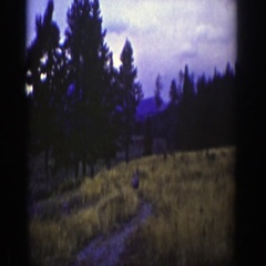 1939: whitetail deer saunters along a mountain game trail. WYOMING Stock Footage