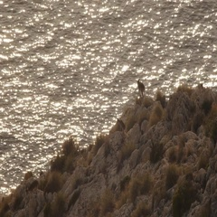 Mountain goat with his baby Stock Footage