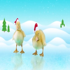 Little newborn ducklings in Santa hats, standing on the ice Stock Footage