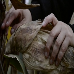 Farmer hands holding corn ear at autumn. Female check maize plant Stock Footage