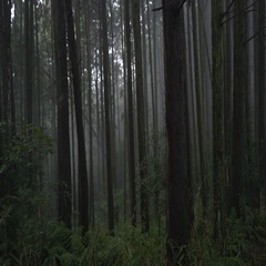 Scary japanese forest on a foggy day, kyoto Stock Footage