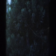 1954: fir tree placed in front of door partially covers house number WISCONSIN Stock Footage