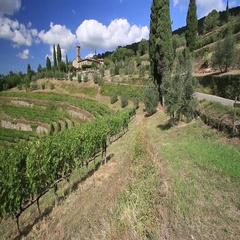 Chianti vineyard landscape Stock Footage