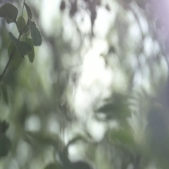 Abstract shaky macro plants in forest Stock Footage