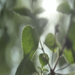 Macro abstract rack focus through leaves Stock Footage