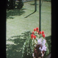 1964: manicured lawn is edged with birdbath, mature trees, saplings, bushes  Stock Footage