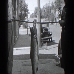 1936: shooting of a fish caught capture workout CALIFORNIA Stock Footage