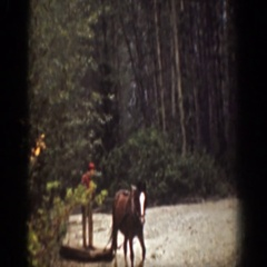 1939: loggers at work in the forest. CHELAN WASHINGTON Stock Footage