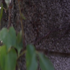 4K Chain hanging from a wall with green leaves of plants while water falls-Dan Stock Footage