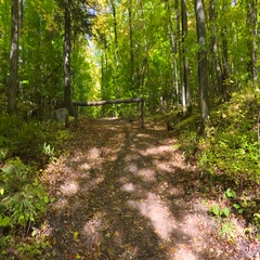 Autumn leaves fall peacefully on trail in forested area on a sunny day in Stock Footage