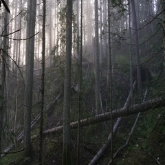 A mystical forest with fog Stock Footage