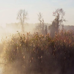 Fog with sun light at frosty morning on the river Stock Footage