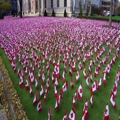 Thousands of Canadian flags on remembrance day for our soldiers and war veterans Stock Footage