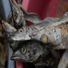 Dry Fish in the Market Stock Footage