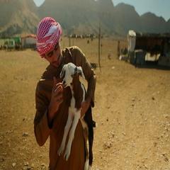 Arab man stroking a goat on desert. Stock Footage