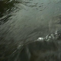 Rowing a paddle in the calm water of the river Stock Footage