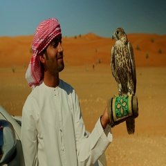 Falconer with falcon perching on his hand. Stock Footage