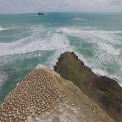 Muriwai Beach Coastline, Auckland. Stock Footage