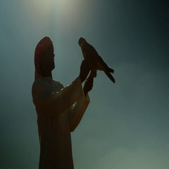 Silhouette of Arab man with falcon perching on his hand. Stock Footage