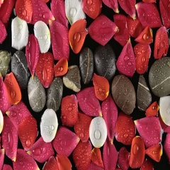 Beautiful rose petals and stones with dew drops blown by by the wind Stock Footage