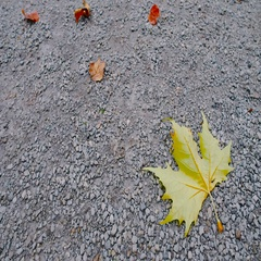 Autumn leaves falling to the ground 1 Stock Footage