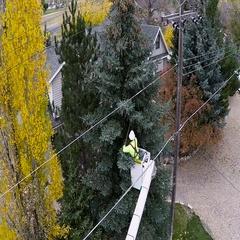 Aerial-Triennial tree trimming by power company keeping limbs from powerlines Stock Footage