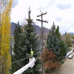 Aerial-Descending view worker trimming tree limbs from power lines Stock Footage