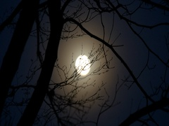 Moon of mood over the branches at nigh Stock Footage