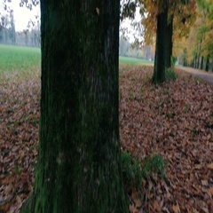 Near a tree in autumn in a park Stock Footage