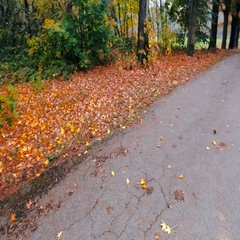 Small alleyway and  trees in a park in autumn 4k 2 Stock Footage