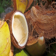 Chopped coconut close-up Stock Footage