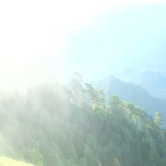 Mist flowing cover forest in the morning scene. (HD footage with sound) Stock Footage