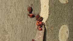 Bedbugs soldiers Kuvituskuvat