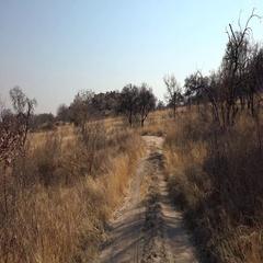 Game Drive in Matobos NP (Zimbabwe; 4K footage) Stock Footage