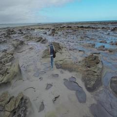Rear view of man walking in wet coastal area Stock Footage