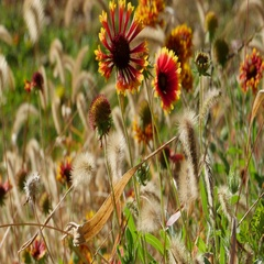 Wild Autumn Flowers Red Orange Long Grass Blowing in the Wind, 4K Stock Footage