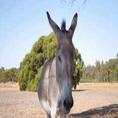 Donkey standing in a farm Stock Footage