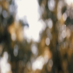 Blurry Golden Background of Fall Leaves, Out of Focus Stock Footage