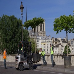 Urban beautification and greening the city - tree for Paris Plage Stock Footage